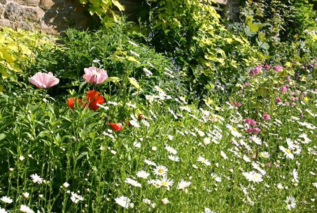 Country Garden at Ollerbrook